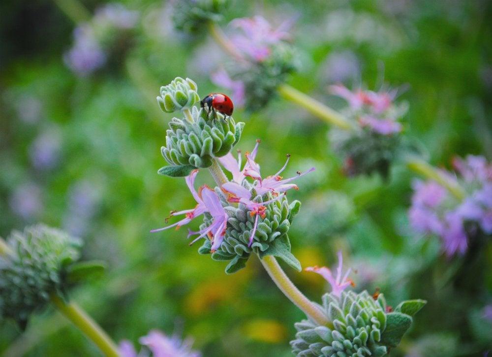 Garden pests   3