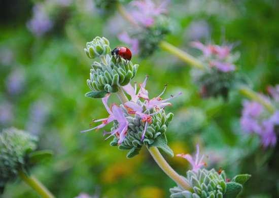 Garden_pests_-_3
