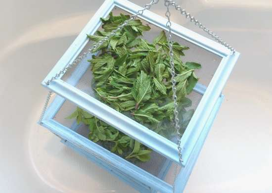 Picture frame   herb rack