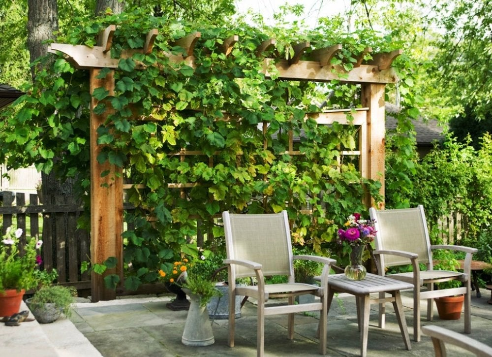 backyard privacy ideas 11 ways to add yours bob vila. Black Bedroom Furniture Sets. Home Design Ideas