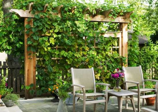 Privacy Ideas For Backyards 25 best ideas about backyard privacy on pinterest patio privacy privacy landscaping and garden privacy screen Trellis Ideastrellis Ideas Privacy Trellis