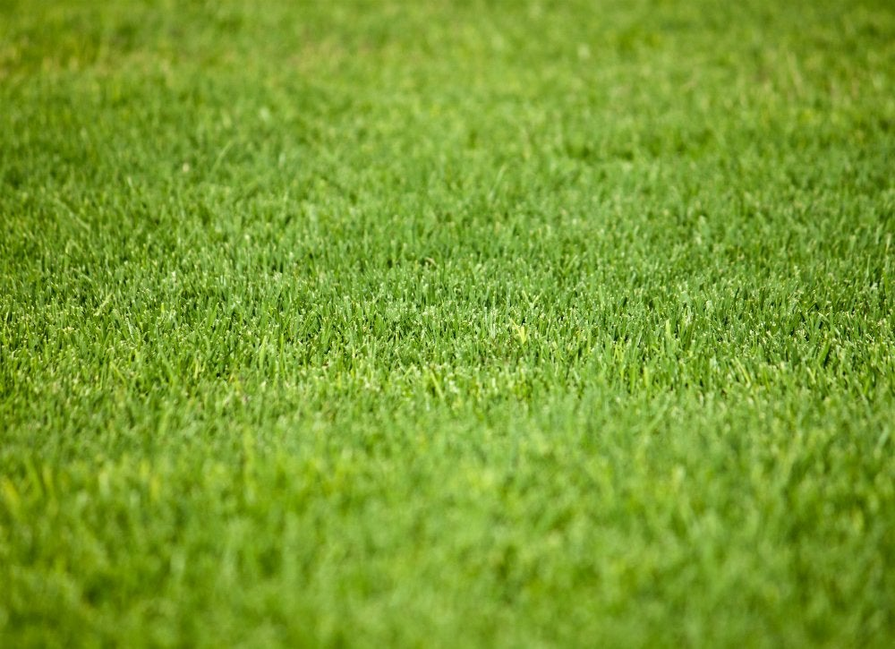 Fake grass for more