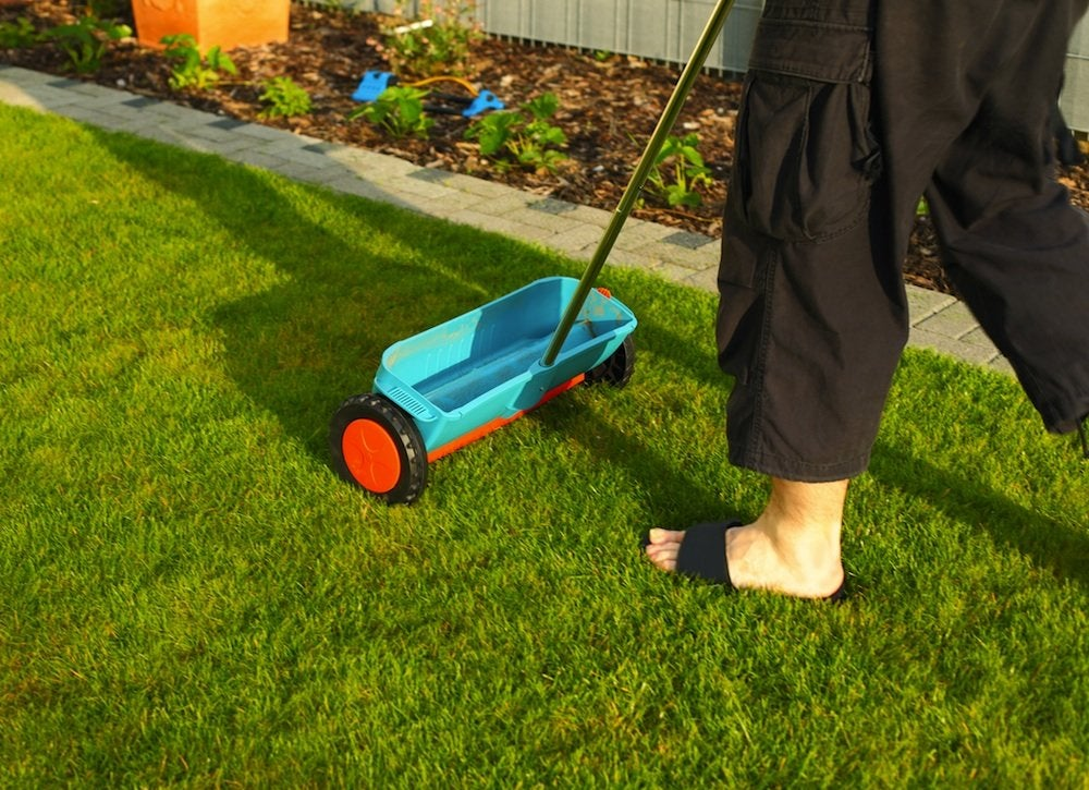 Epsom_salt_lawn_spreader