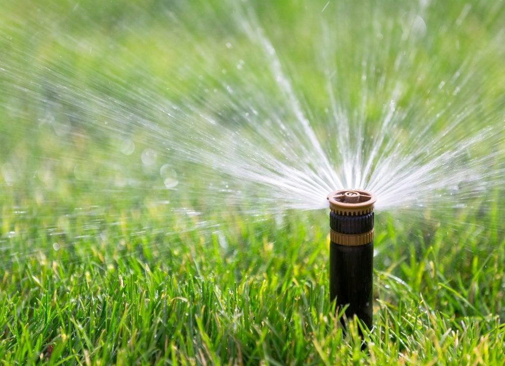 Lush lawn   thirsty
