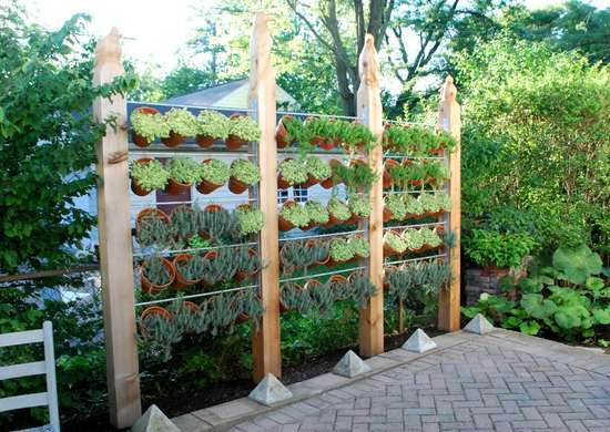 Plant wall for backyard privacy