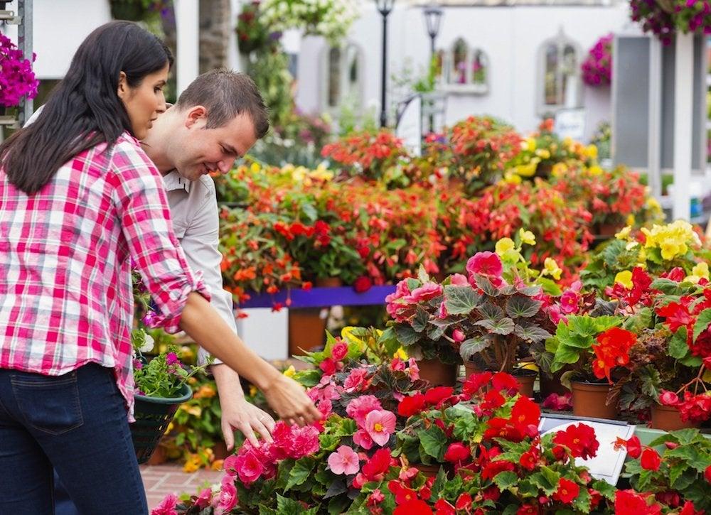 Choosing plants