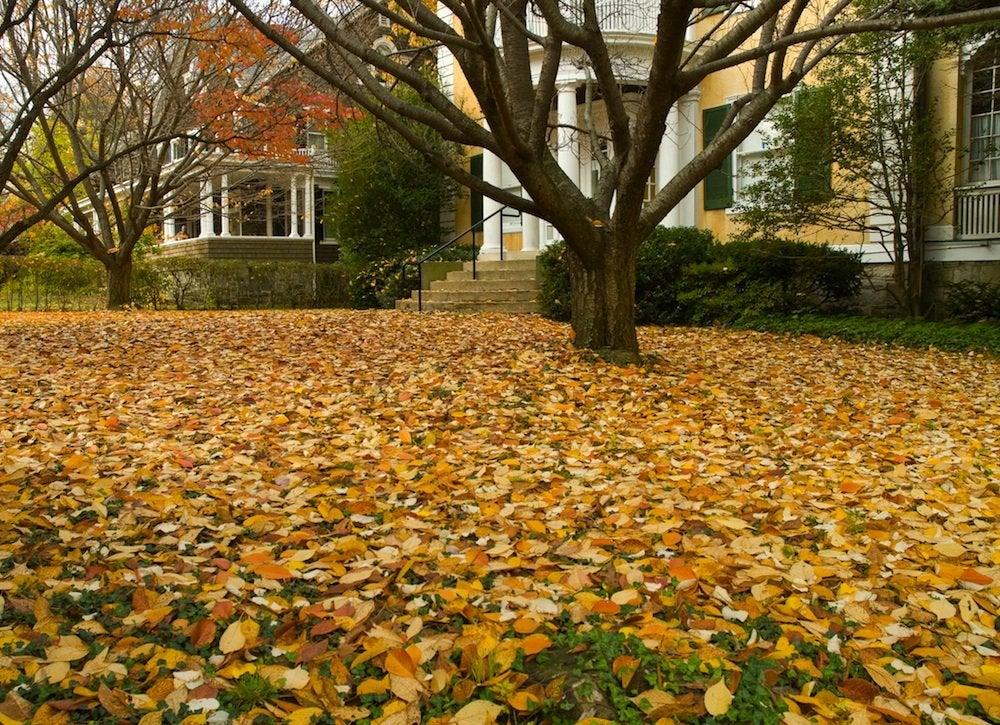 Fall yard
