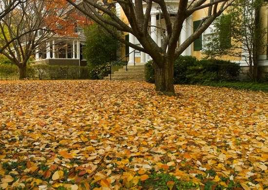 Fall_yard