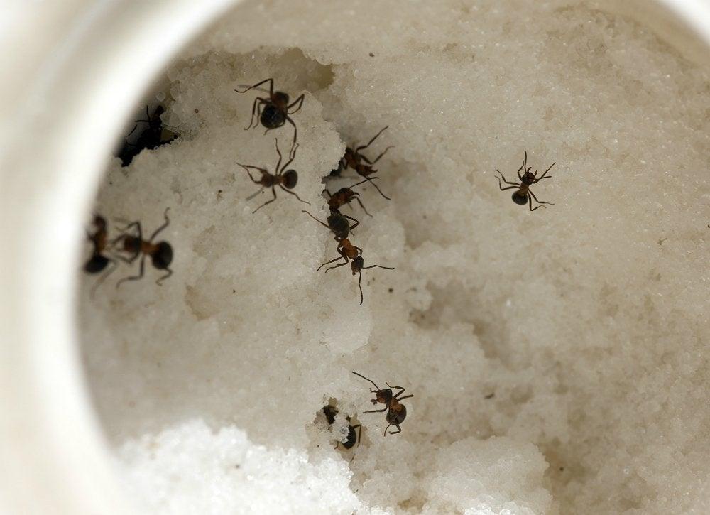 Pest_control_3