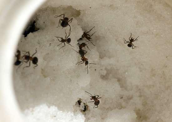 Pest control 3