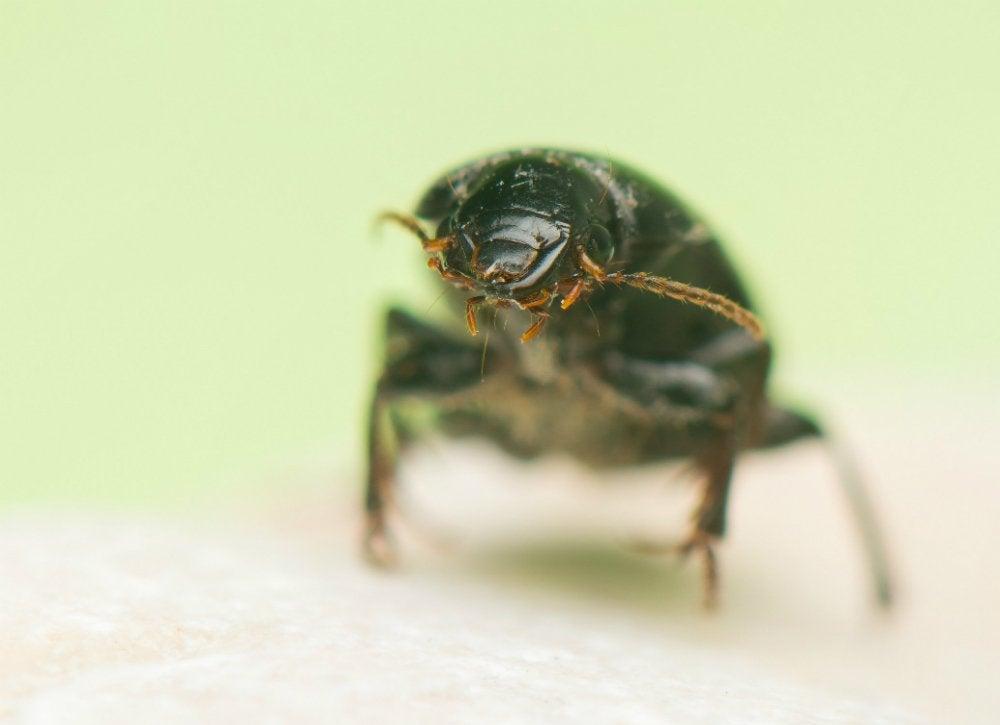 Pest_control_8