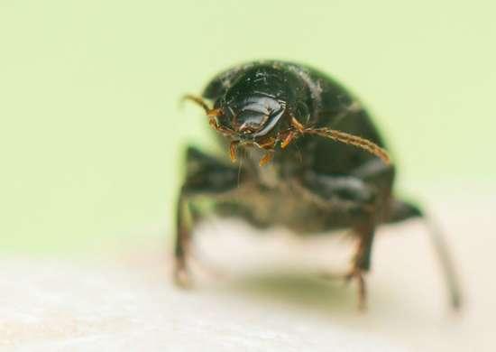 Pest control 8