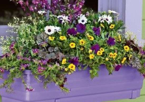 Self-Watering Window Box