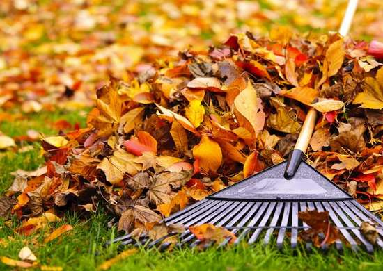 Raking_leaves