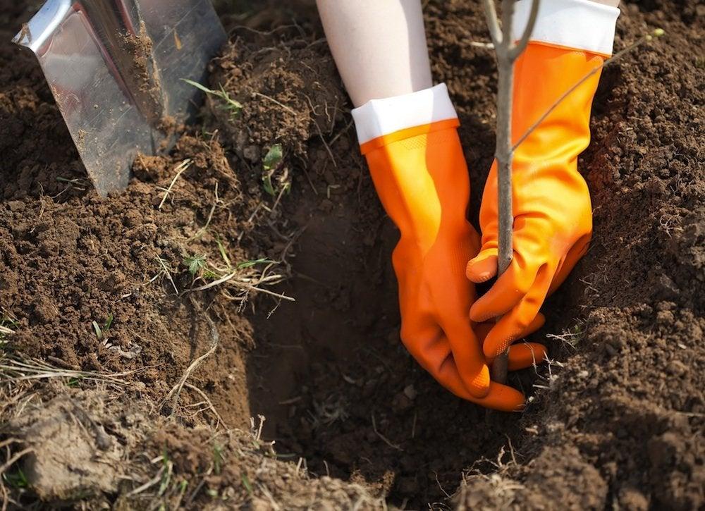 Planting_tree