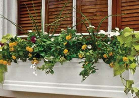 Charleston Gardens Window Box