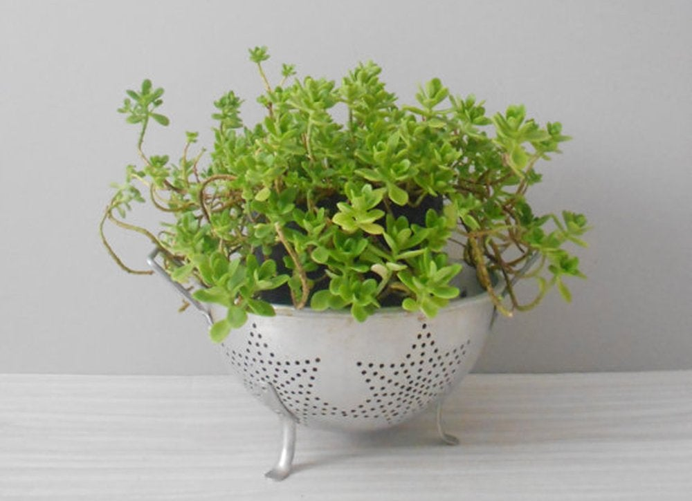 Wire hanger diy planter