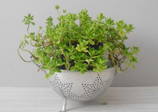 wire_hanger_diy_planter?1501004540 9 wire harness for planter wire wall planters \u2022 indy500 co  at reclaimingppi.co