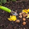 Fall Gardening - Planting Bulbs