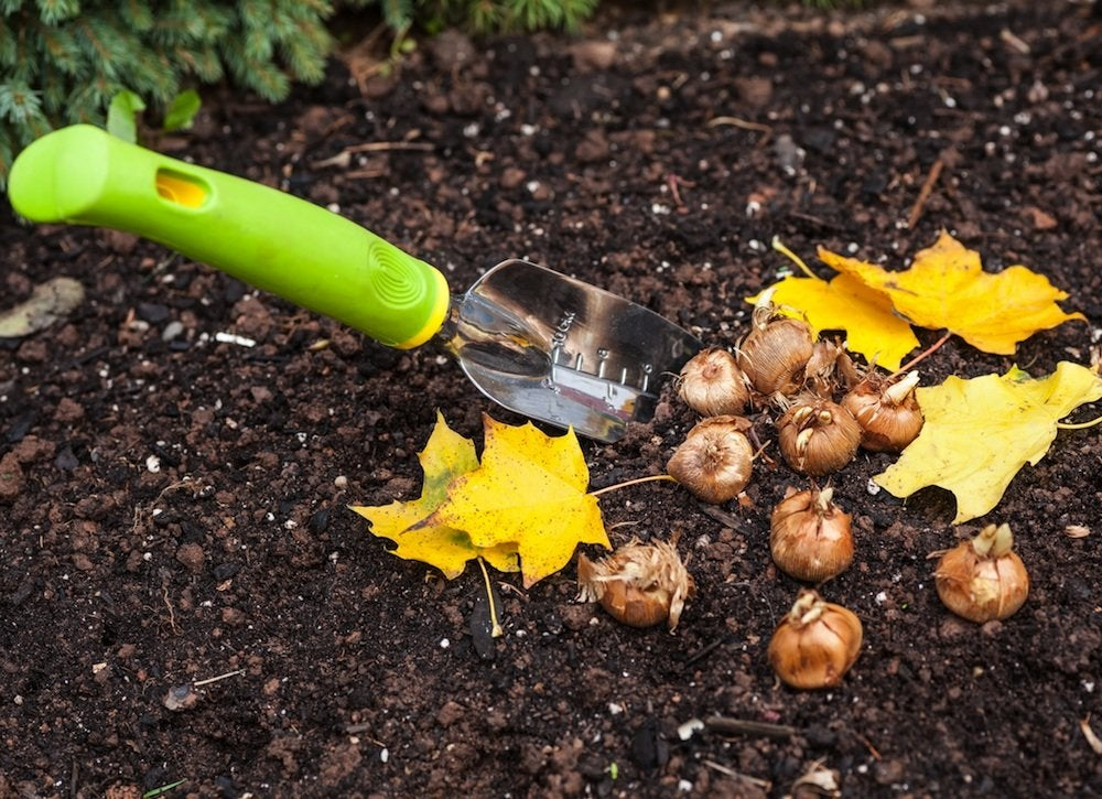 Plant spring bulbs in fall