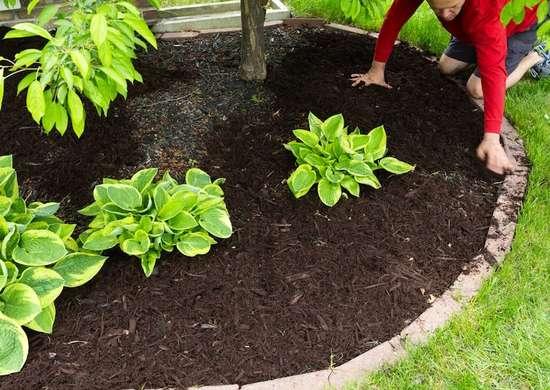 Fall Gardening - Mulching