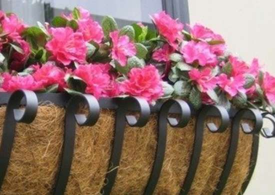 Scroll Iron Window Box