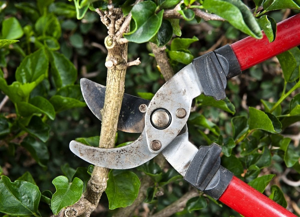 Yard Clean Up 9 Tricks For Easier Fall Maintenance Bob