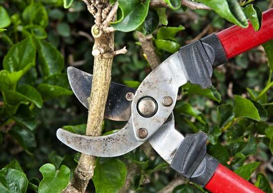 Sharp hedge pruners