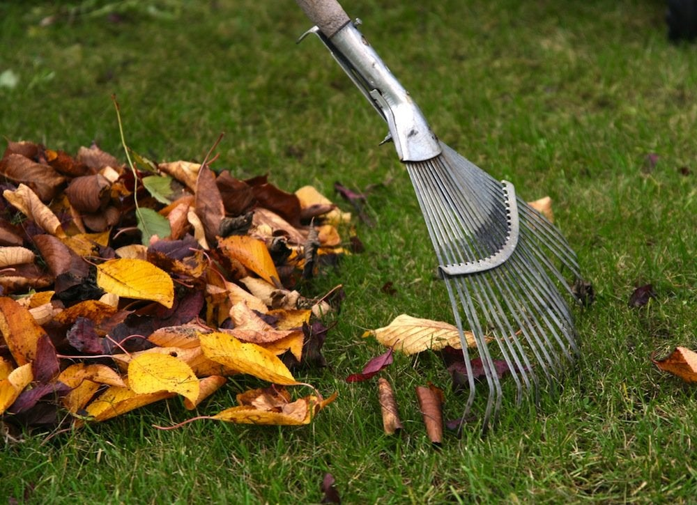 Rake the leaves on to the tarp and then roll the tarp up like a cigarette to create a tube that encapsulates the leaves. Place and hold a trash bag over one end of the rolled-up tarp. Have your helper lift the other end of the tarp up to funnel the leaves into the trash bag.