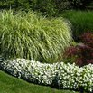 Trim Ornamental Grass