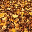 Leaf Tarp