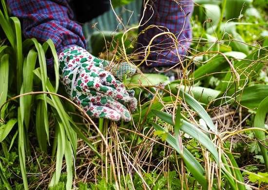 Weeding garden yard clean up 9 tricks for easier fall maintenance bob vila - Weeding garden make work easier ...