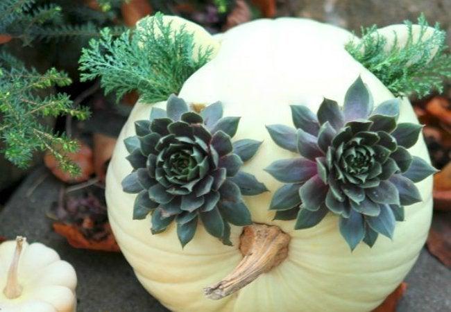 Pumpkin_16