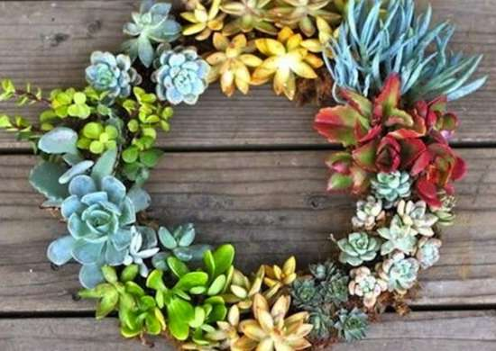 Succulent_wreath