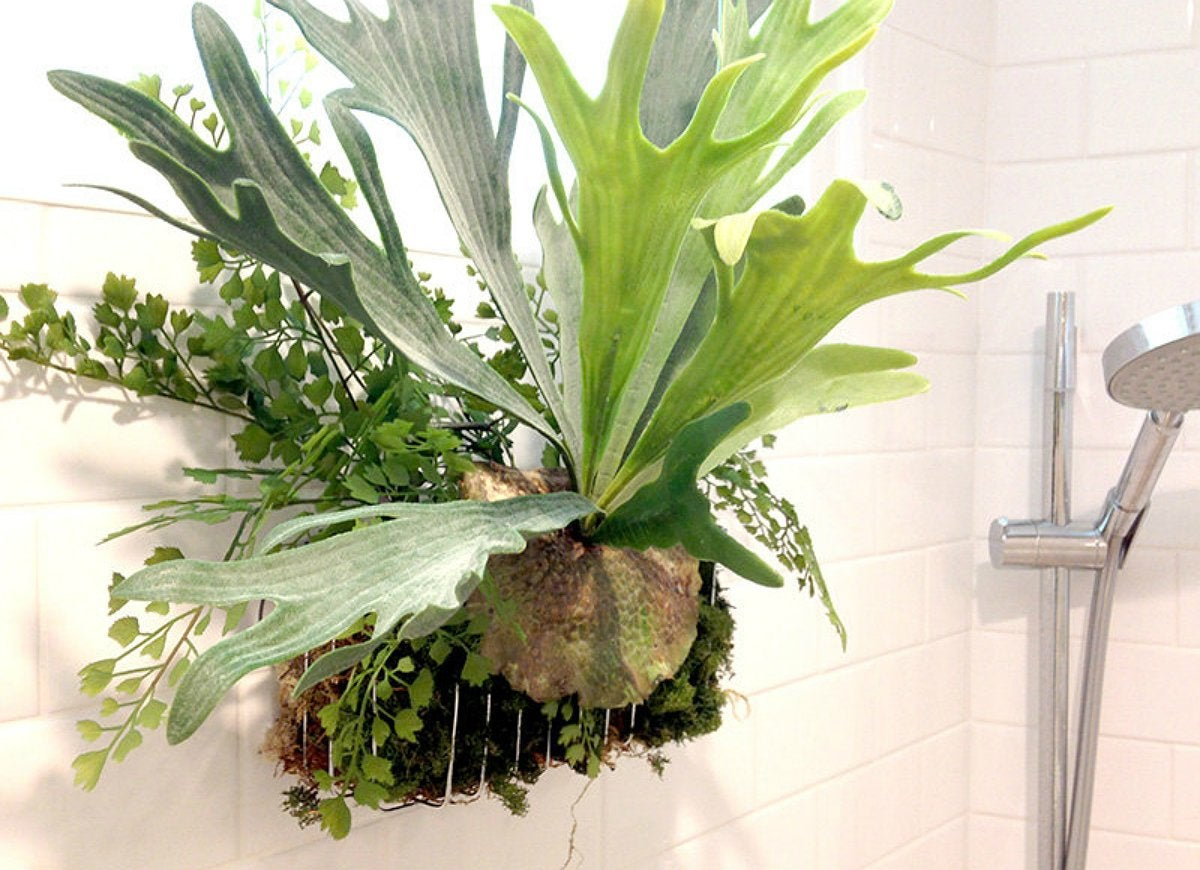 best indoor plants - 7 picks for every room - bob vila