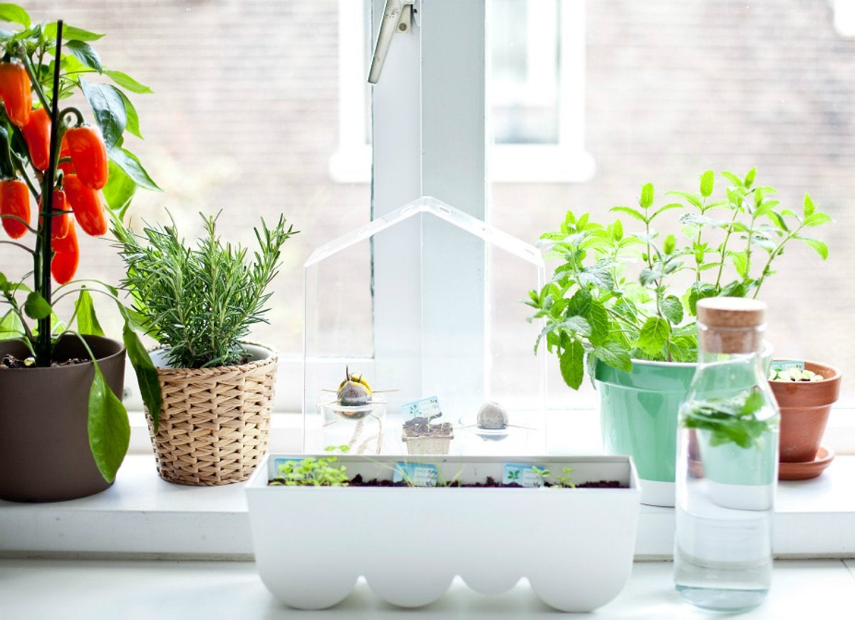 Indoor kitchen herb garden charming minimalist kitchen for Design indoor herb garden
