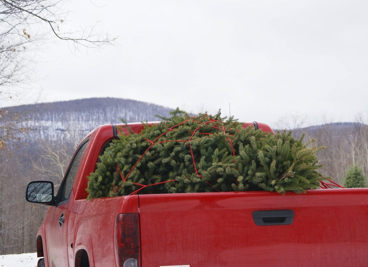 Christmas_tree_truck_bed