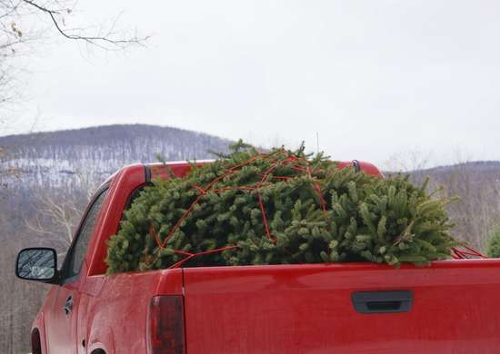 Christmas tree truck bed
