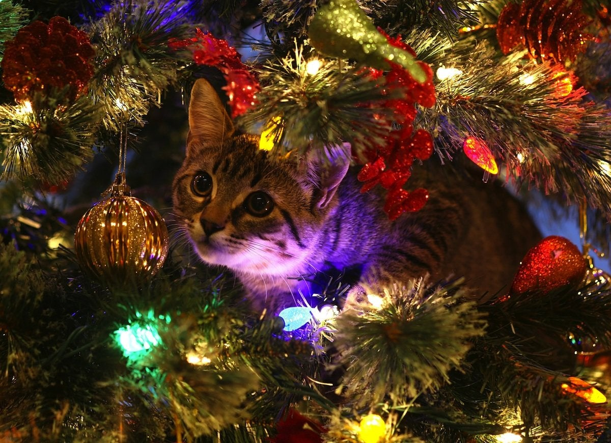 Cat_in_a_christmas_tree