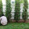 Pest Proof Your Plants
