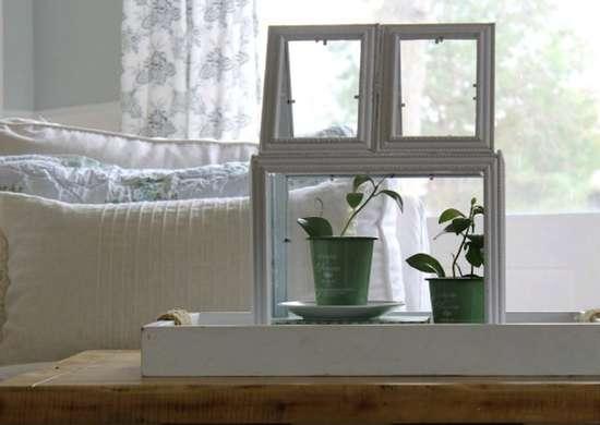 Plant_terrarium
