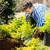 Dig a Big Hole for New Shrubs