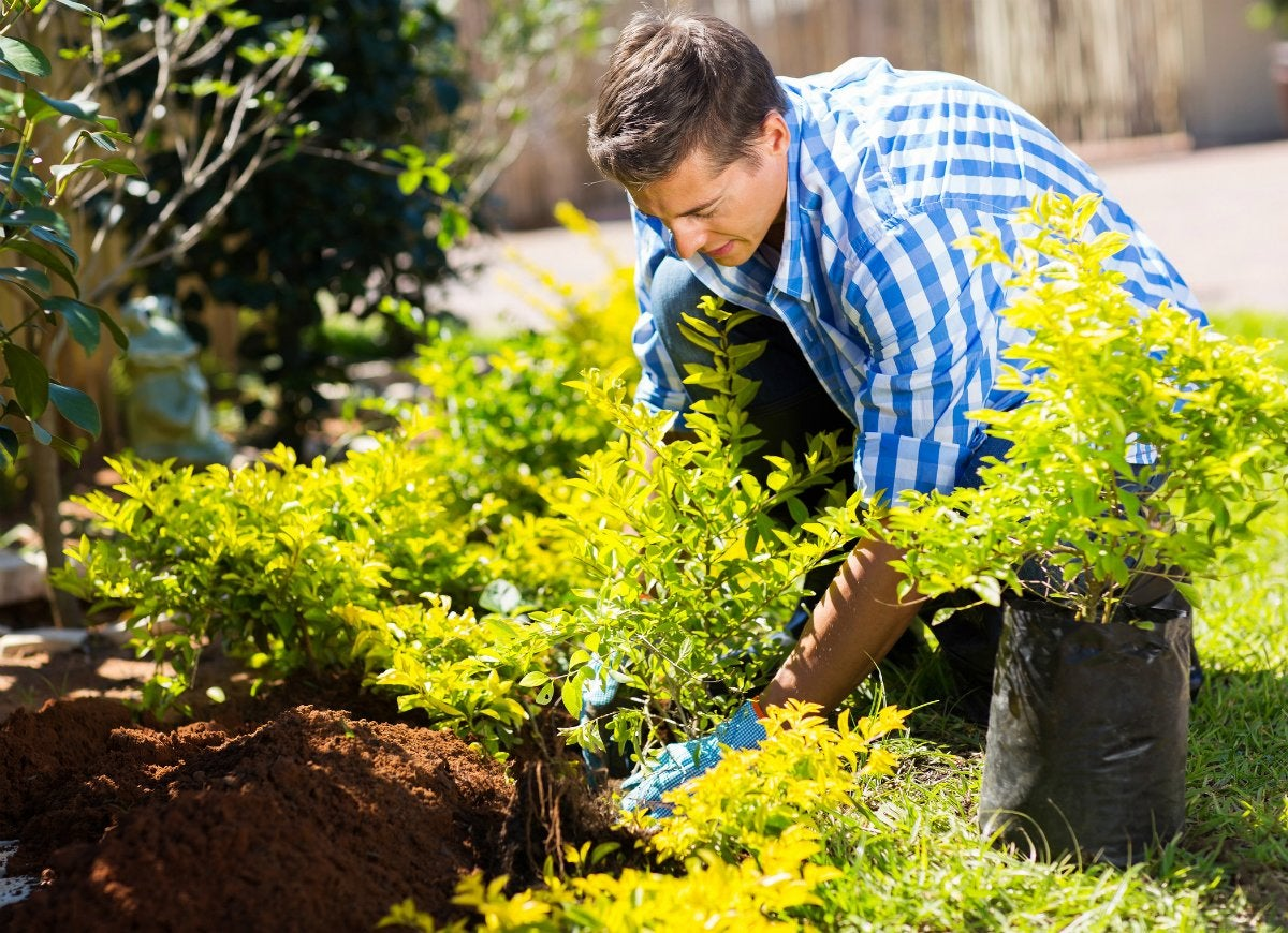 Gardening myths 3