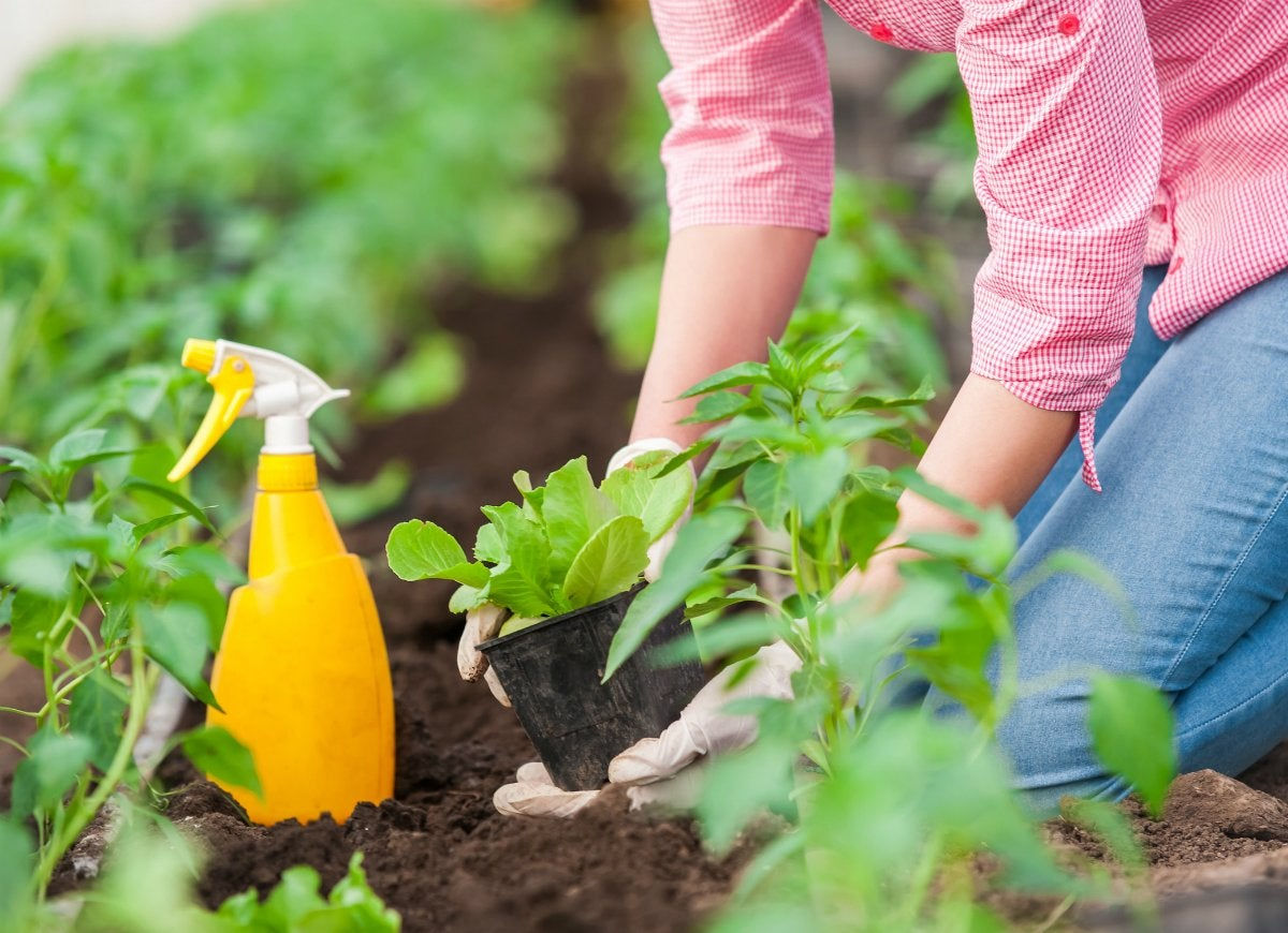 Gardening basics 11 age old tips to ignore completely for Garden pesticides