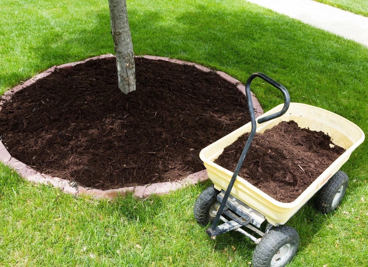 Mulch_around_tree