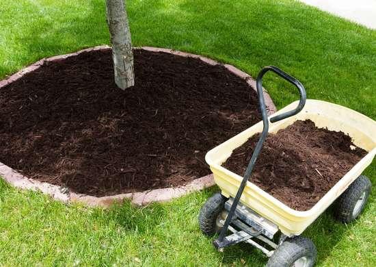 Mulch Heavily Around Trees to Retain Moisture