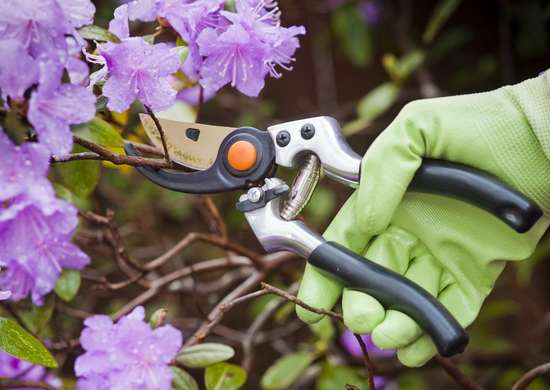 Prune Transplanted Trees and Shrubs