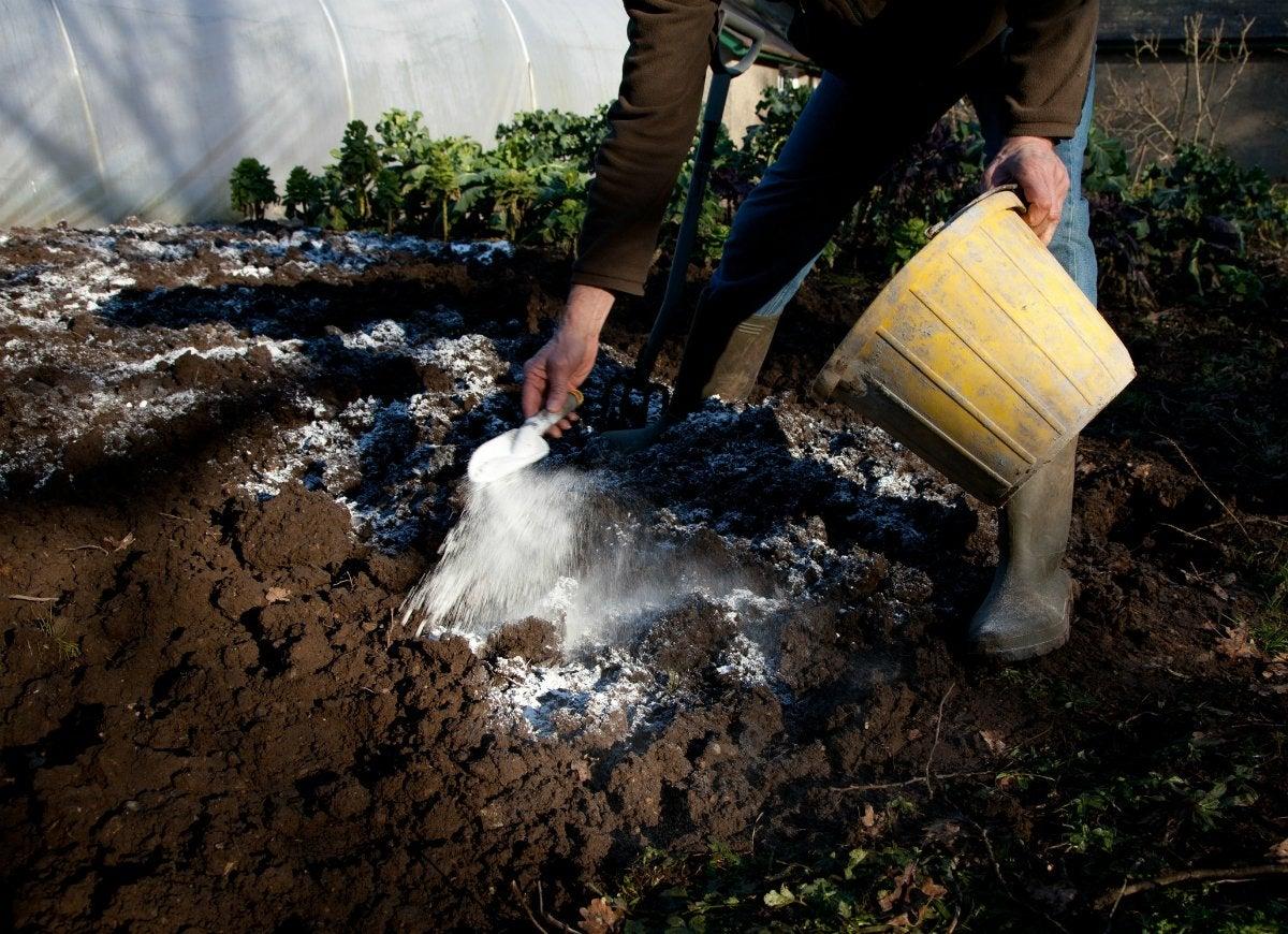 Gardening myths 11