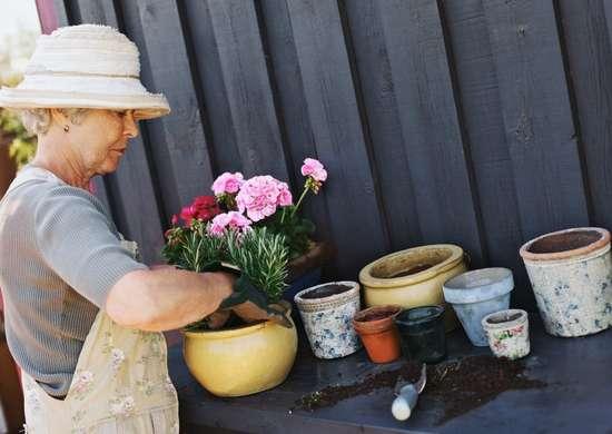 Gardening myths 12