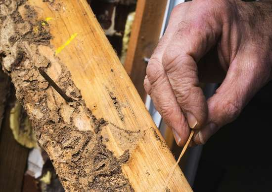 Check for Signs of Termites